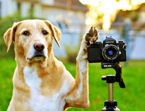 get a good profile photo for your dog