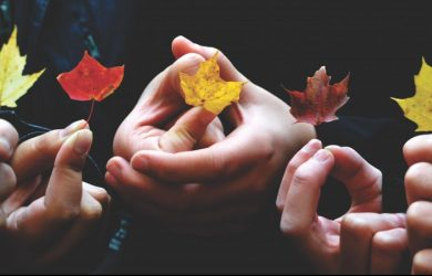 diverse-leaves